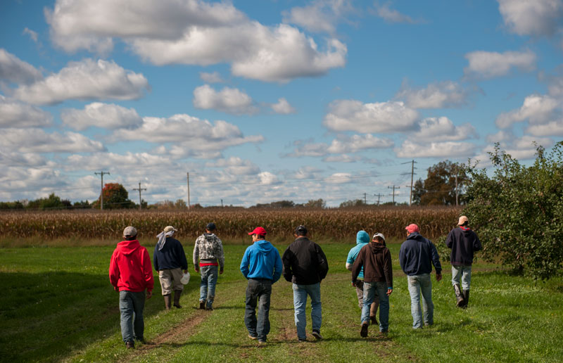 A group of workers from Heberle Farms in Kendall, all of who hail from the Mexican state of Michoacán, talk to one another as they head into the orchard to start picking Oct. 8, 2013.