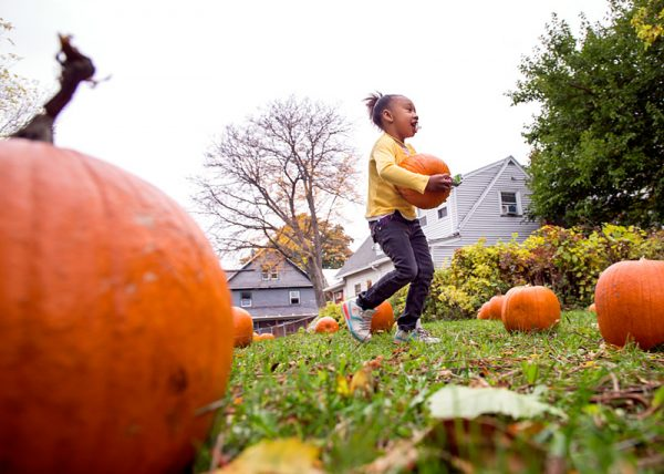 Four-year-old Anjanique Williams finds a pumpkin to decorate during the festival.